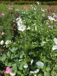BÍLÁ - květinová směs - 2