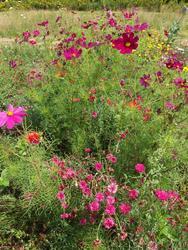 ČERVENÁ - květinová směs, 50 g - 2