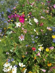 LETNÍ SKLIZEŇ - květinová směs, 50 g - 2