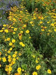 ŽLUTÁ - květinová směs - 2