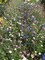 PASTELL - květinová směs, 50 g - 2