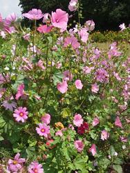 RŮŽOVÁ - květinová směs, 50 g - 2