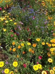 STŘEDOVĚK - květinová směs, 50 g - 2