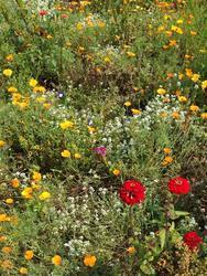 MULTICOLOR - květinový koberec, 50 g - 2