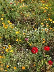 MULTICOLOR - květinový koberec - 2