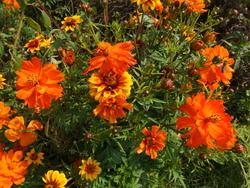 ORIENT - květinový koberec - 2
