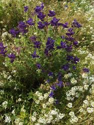 ULTRAMARIN - květinový koberec - 2