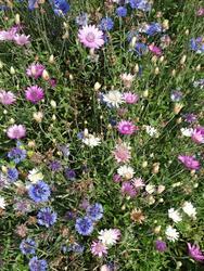 PASTELL - květinová směs - 3