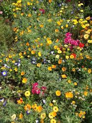 MULTICOLOR - květinový koberec, 50 g - 3