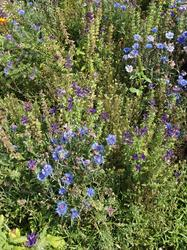 ULTRAMARIN - květinový koberec, 500 g - Na objednávku - 3