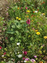 LETNÍ EXPRESS - květinová směs, 500 g - Na objednávku - 3