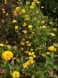 ŽLUTÁ - květinová směs - 3