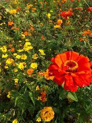 ORANŽOVÁ - květinová směs - 3