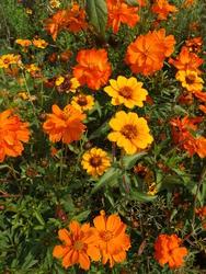 ORIENT - květinový koberec - 3