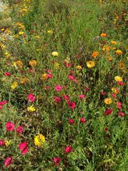 STŘEDOVĚK - květinová směs, 50 g - 3