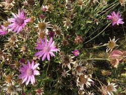 PASTELL - květinová směs - 4
