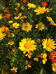 ORANŽOVÁ - květinová směs - 4