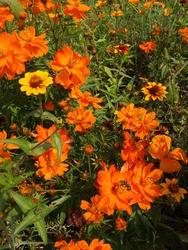 ORIENT - květinový koberec - 4