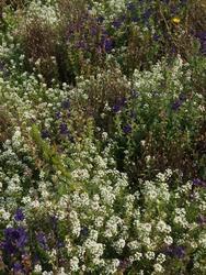 ULTRAMARIN - květinový koberec, 500 g - Na objednávku - 4