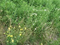 KORIDOR bylinná rekultivační směs, 1 kg - 4