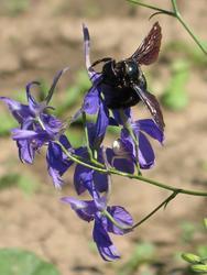VILÍK včelí louka medonosná - 5