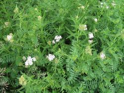 KORIDOR bylinná rekultivační směs, 1 kg - 5