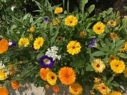 MULTICOLOR - květinový koberec, 500 g - Na objednávku - 5